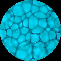 Ingredient - Actigym Marine Extract
