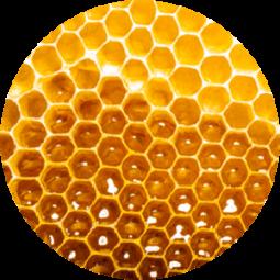 Ingredient - Manuka Honey